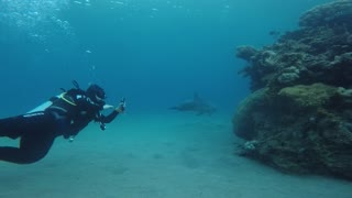 Dolphin swimming with divers in the Red Sea, Eilat Israel 3