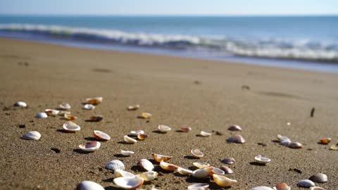marine beach landscape nature / calm