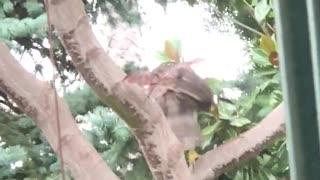 Hawk Visits My Backyard