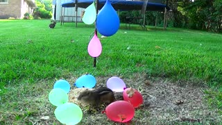 squirrel balloons