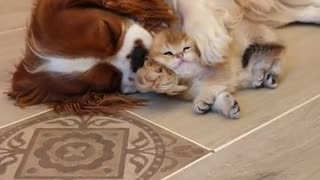 Cute Puppy Cleans Kitty
