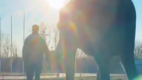 Smart Elephant Training with Human video