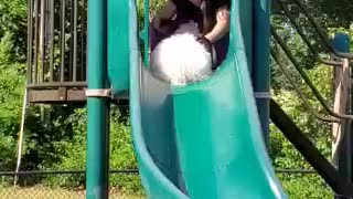 Dog goes down slide with his Mom