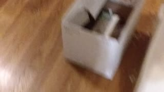 Chihuahua gets excited when owner comes home, then licks the dishwasher XD