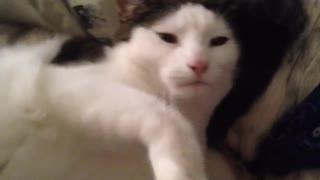 Affectionate kitten demands cuddles from sleeping dog