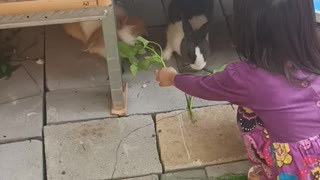 Let's Feed The Rabbit!