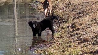 Dogs prefer pond water