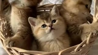 Cute Kittens Family