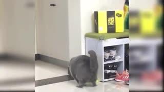 Kitten having fun with the ball.