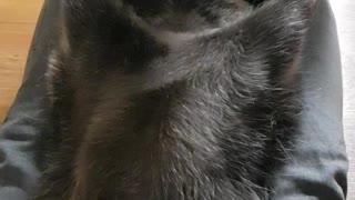 Raccoon gets a massage like a human.