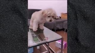 Money Saving Dog!