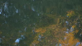 relaxing video Distorted Reflection Of Trees On A Calm Lake Surface.