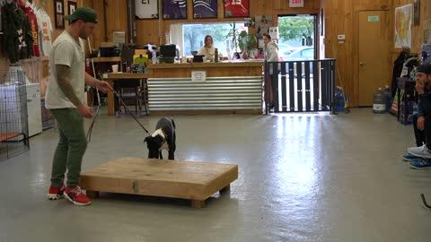 Basic Training Foundation for any dogs