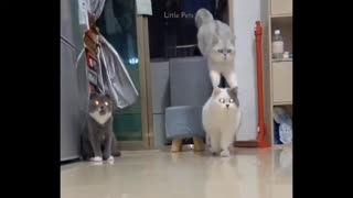 Watch this Adorable cats playing with IRON MAN !