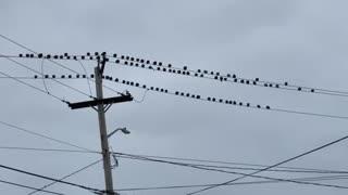 Just pigeons chillin