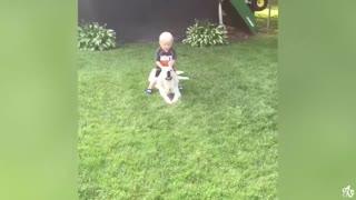 Funny Animals compilation videos