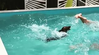 Dachshund dives into pool in epic slow motion