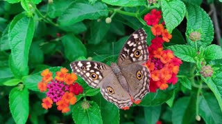 Beautiful Butterfly and relaxing music