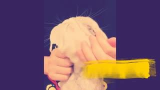 Cat shaking hands