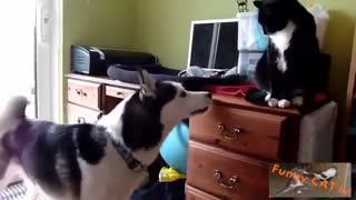 Cats & Dogs Are Meeting Each Other For The First Time