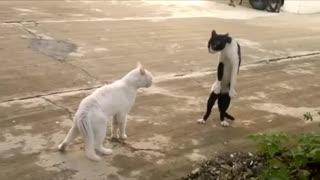 Ninja cat 2