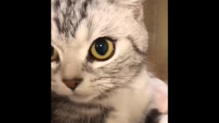 Daily cat video - 4