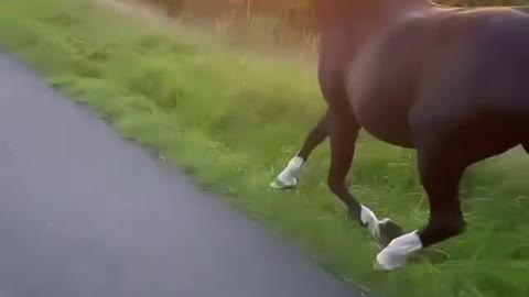 Girl rollerblading sunset with horse and dog⛅️