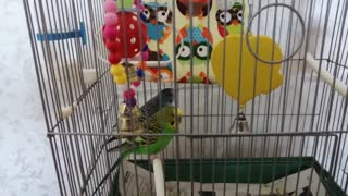 My parrots are in a cage.