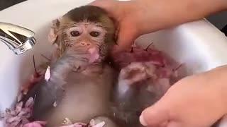 Cute monkey 🐵 taking shower