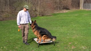 MOST OVERLOOKED DOG TRAINING COMMAND!!