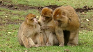 Monkey family meeting.