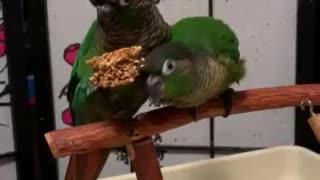 Machi&Merlin Share Food
