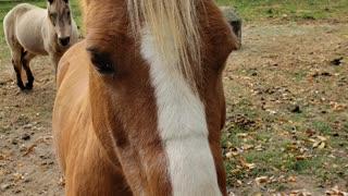 Friendly Horses 2
