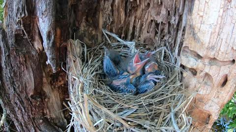 Conclusion to eggs in a nest