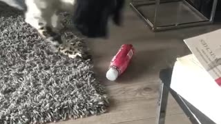 Adorable pup plays with bottle
