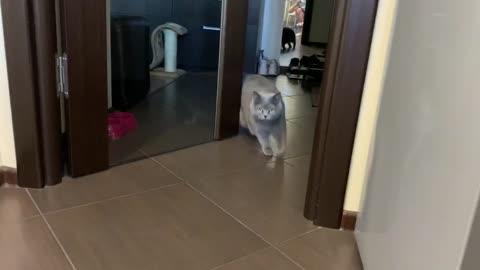 Always hungry kitten
