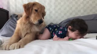 Golden Retriever Preciously Babysits Baby Girl