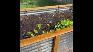 Growing a small backyard garden
