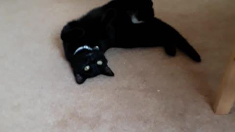 Spastic cat