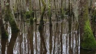 Boat ride through Swamp Park