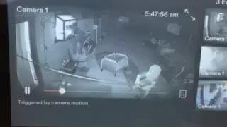 Demonic activity on security cameras