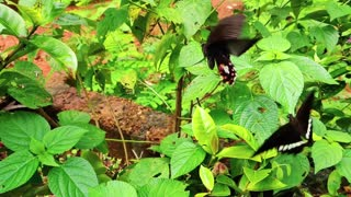 The beautiful butterfly flies among plants and flowers