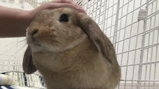 Cute bunny thoroughly enjoys cuddling