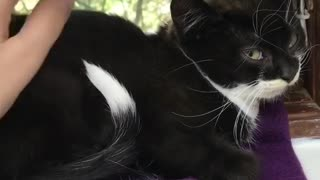Small Kitten Siting Beside the Window
