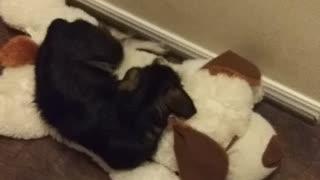Adorable puppy sleeping