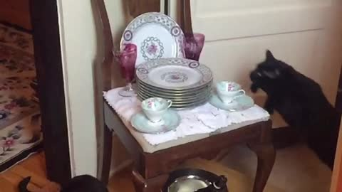 Epic slow motion footage captures cat's jumping abilities