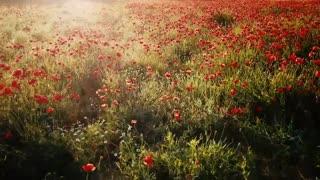 Beautiful garden flowers background clip