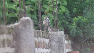 Amazing and wonderful view of the Sparrow
