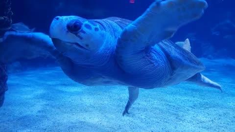 Sea turtle 🐢