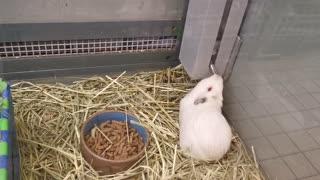 Funny super hamster